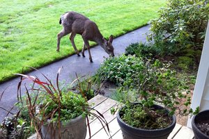 landscaping-mistakes-curb-appeal-bushes-deer_f757f446a977745ebe6eaecd9cb4ed5d_3x2_jpg_300x200_q85